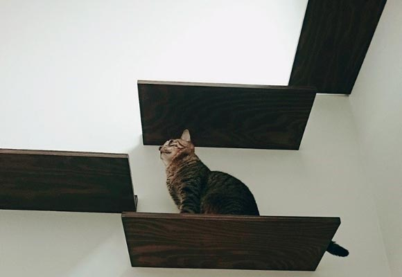 『猫』と『いごこちの良い暮らし』
